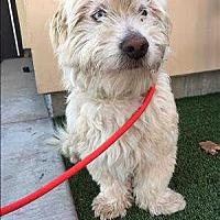 Adopt A Pet :: Keno - Encino, CA