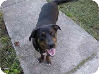 Border Collie/Shepherd (Unknown Type) Mix Dog for adoption in Wytheville, Virginia - Cooper