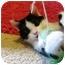Photo 1 - Domestic Shorthair Cat for adoption in Radford, Virginia - Oliver