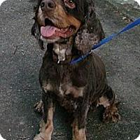Adopt A Pet :: Travis - Sugarland, TX