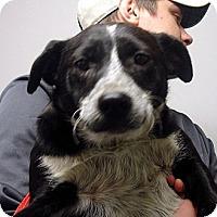 Adopt A Pet :: O'rouke - Greencastle, NC