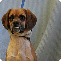 Adopt A Pet :: Copper - Roosevelt, UT