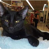 Adopt A Pet :: Spirit - Orlando, FL