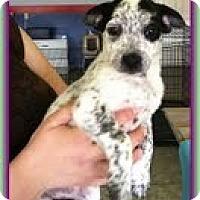 Adopt A Pet :: Breezy - Staunton, VA