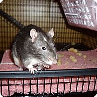 Adopt A Pet :: Uno - Greenwood, MI