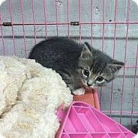 Adopt A Pet :: Edsel - Island Park, NY