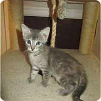 Adopt A Pet :: Trixie - Mobile, AL