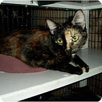 Adopt A Pet :: Leah - Little Rock, AR