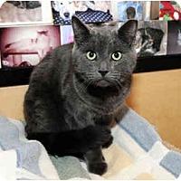 Adopt A Pet :: Alvin - Farmingdale, NY