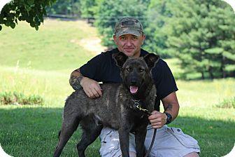 Belgian Malinois/German Shepherd Dog Mix Dog for adoption in Greeneville, Tennessee - Smokey