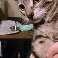 Adopt A Pet :: Fred - Walla Walla, WA
