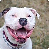 Adopt A Pet :: Lily - Eugene, OR