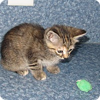 Adopt A Pet :: Madison - Harrisburg, NC