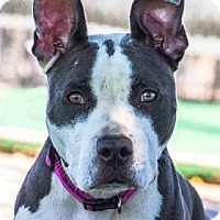 Adopt A Pet :: Charlotte - Las Cruces, NM