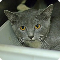 Adopt A Pet :: 10311536 - Brooksville, FL