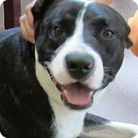 Adopt A Pet :: Rocky - Sierra Vista, AZ