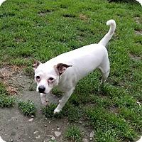 Adopt A Pet :: Kevin - East Randolph, VT