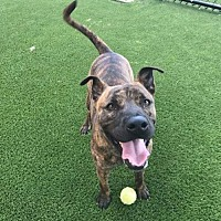 Adopt A Pet :: Fred - Maquoketa, IA