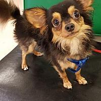 Adopt A Pet :: Mumbo - Walden, NY