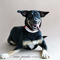 Adopt A Pet :: Maykaya - Marietta, GA
