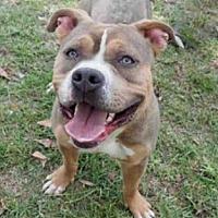 Adopt A Pet :: EDDIE - Los Angeles, CA