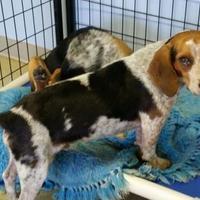 Adopt A Pet :: Ricky - Valley Falls, KS