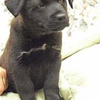Adopt A Pet :: Gilbert - Wickenburg, AZ
