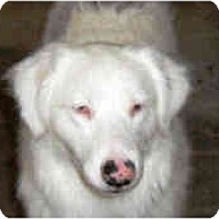 Adopt A Pet :: April - Mesa, AZ