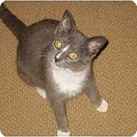 Adopt A Pet :: GiGi - Jenkintown, PA