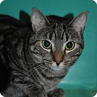 Adopt A Pet :: Charles - Rockaway, NJ