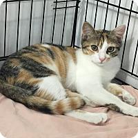 Adopt A Pet :: Mira - Speonk, NY