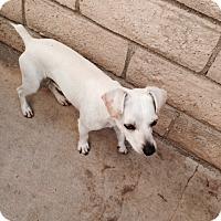 Adopt A Pet :: Nikki - Simi Valley, CA