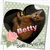 Domestic Mediumhair Cat for adoption in Salisbury, North Carolina - Betty