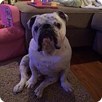 Adopt A Pet :: Norman - Columbus, OH
