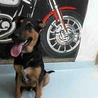 Adopt A Pet :: LUCKY - Pasadena, TX