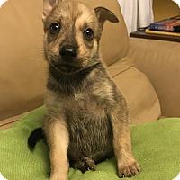 Adopt A Pet :: Beal - Danbury, CT
