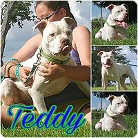 Adopt A Pet :: Teddy - Union City, TN