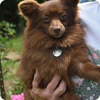 Adopt A Pet :: Bonnie - McKenna, WA