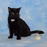 Adopt A Pet :: Kara Zor-El - Elk Grove Village, IL