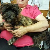 Adopt A Pet :: Scruffy - Livingston, TX