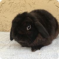 Adopt A Pet :: Magic - Bonita, CA