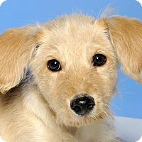 Adopt A Pet :: Lewis (Louie) - Crossville, TN