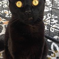 Adopt A Pet :: Onyx - Bear, DE