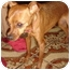 Photo 1 - Miniature Pinscher/Chihuahua Mix Dog for adoption in Lake Forest, California - Babe