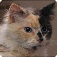 Adopt A Pet :: Trinity - Davis, CA