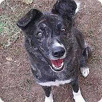 Adopt A Pet :: Talita - Fort Riley, KS