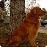 Adopt A Pet :: Linny - Denver, CO