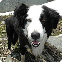 Adopt A Pet :: Tripp - Denver, CO