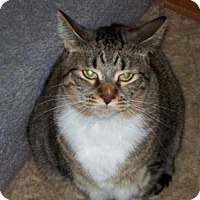 Adopt A Pet :: Bonni - Kelso/Longview, WA