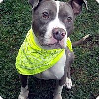 Adopt A Pet :: Grayson - Portland, OR